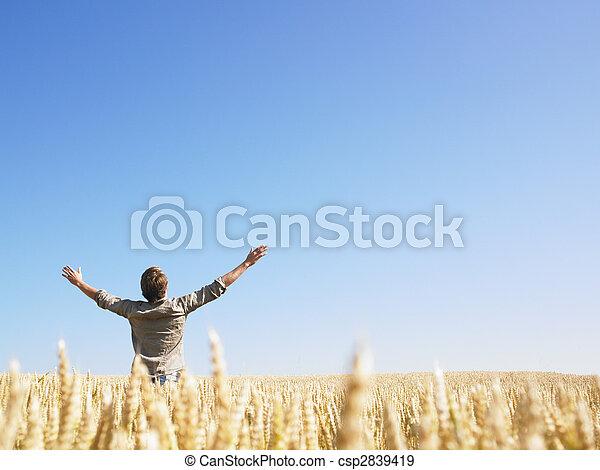 Hombre en el campo de trigo con brazos extendidos - csp2839419