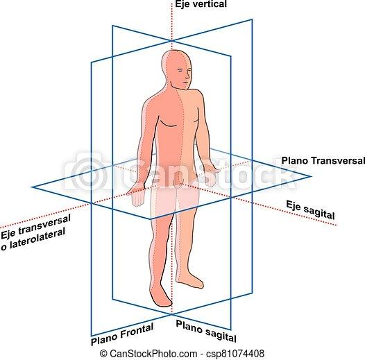 humano, cuerpo, y, planos, del, ejes - csp81074408