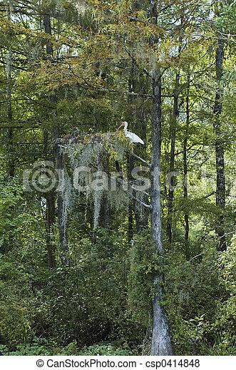 Ibis en ciprés - csp0414848