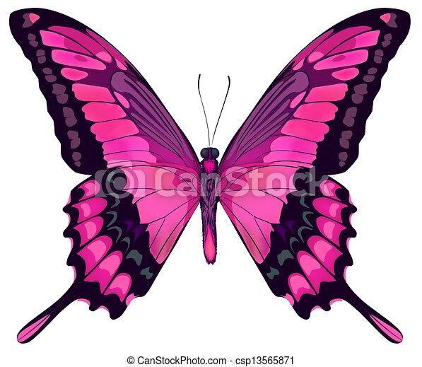 Ilustración vectorial de hermosa mariposa rosa aislada en el fondo blanco - csp13565871