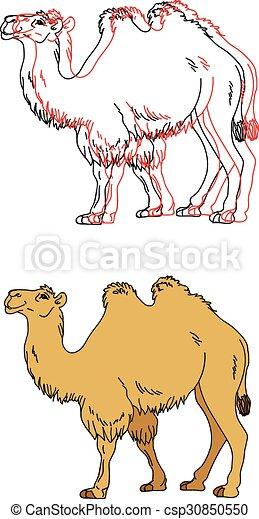 Imágenes de un camello - csp30850550