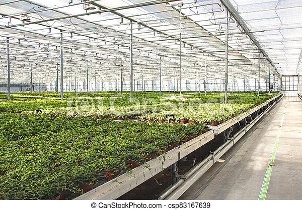 invernadero, cuarto de niños de la planta - csp83167639