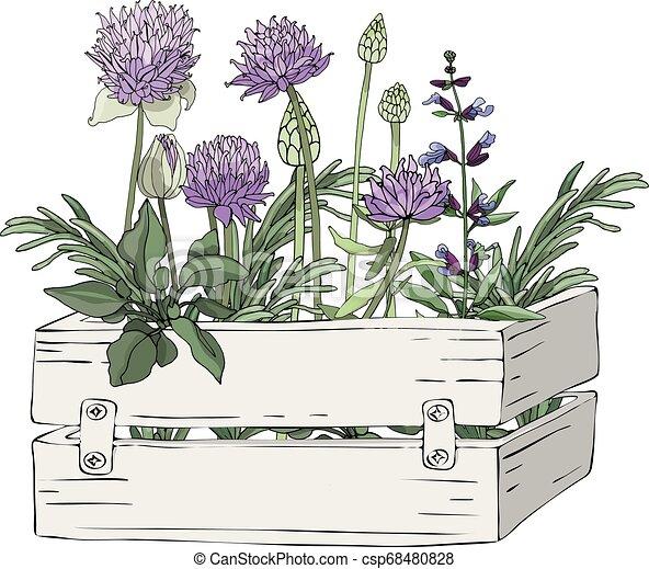 Una caja de madera con hierbas y flores. - csp68480828