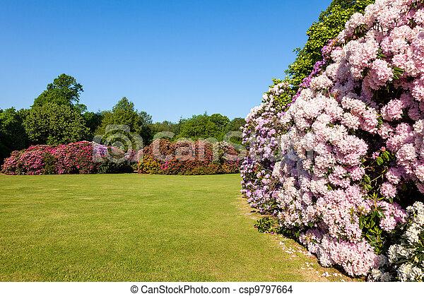 Jardín de flores de Rhododendron - csp9797664