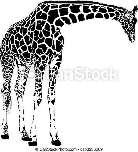 Vector de jirafa - csp8336269
