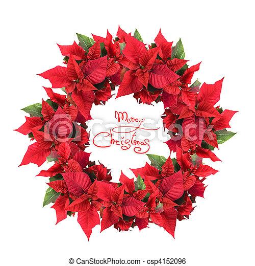 La corona de Navidad de poinsettia - csp4152096