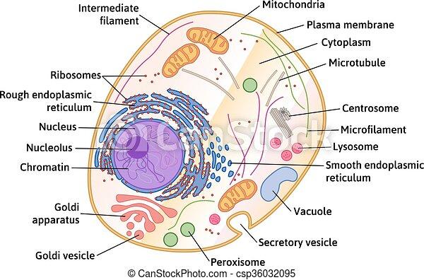 La estructura celular de Vector - csp36032095