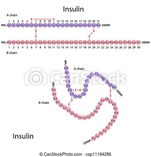 La estructura de la insulina humana, Eps8 - csp11194286