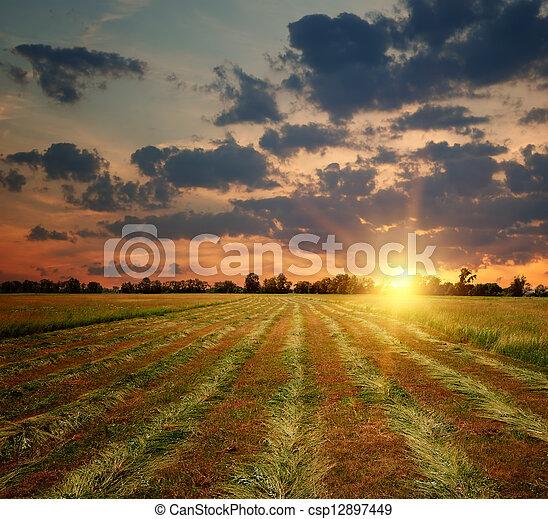 La puesta del sol en el campo - csp12897449