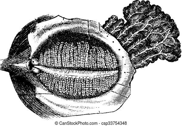La superficie profunda del párpado humano con la glándula nasolacrimal, Vi - csp33754348