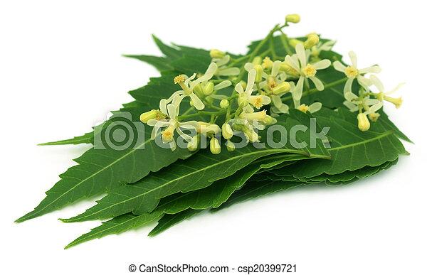 Las hojas de neem medicinales y las flores - csp20399721