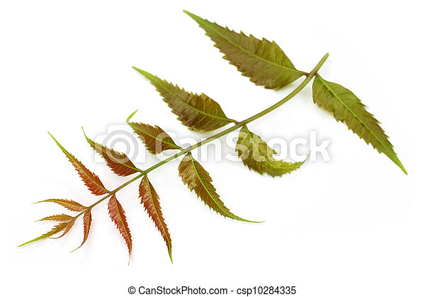 Las hojas medicinales tiernas - csp10284335
