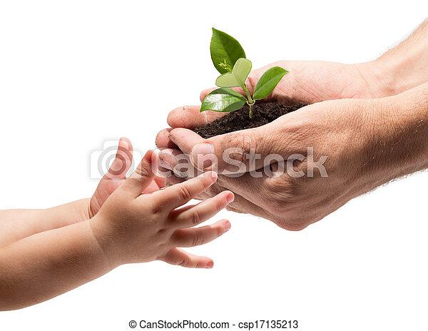 Las manos de un niño tomando una planta - csp17135213
