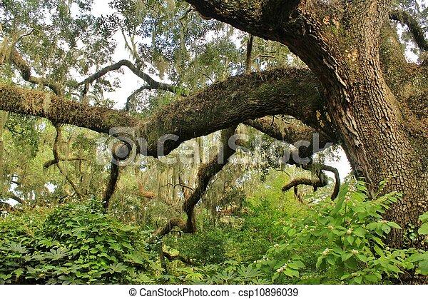 Las ramas de los árboles - csp10896039