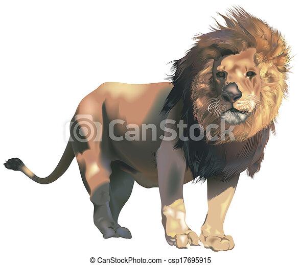 León macho - csp17695915