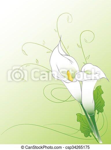 Trasfondo de lirios de Calla - csp34265175