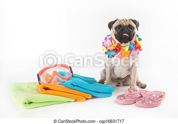 Listo para las vacaciones. Perro gracioso sentado junto a la pila de toallas y la máscara de natación mientras está aislado en blanco - csp16631717