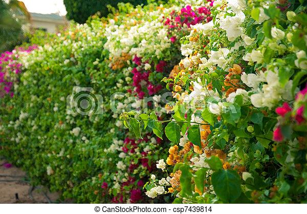 Los arbustos de flores - csp7439814