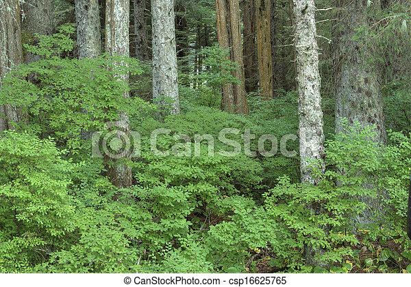 Los arbustos de Huckleberry - csp16625765