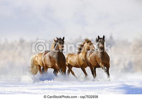 Los caballos corren - csp7532938