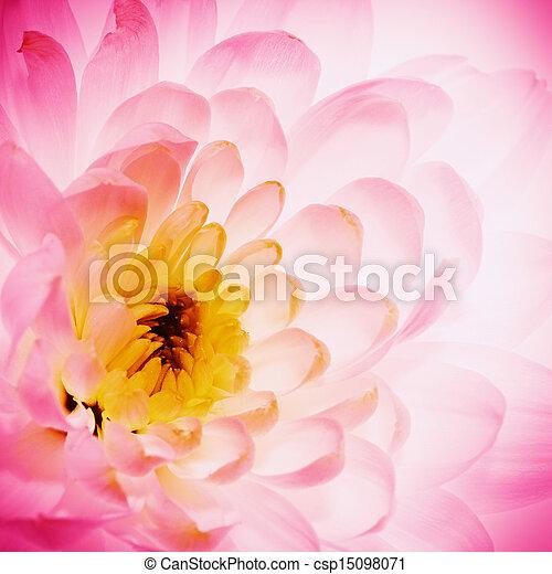 Los pétalos de flores de loto como fondo natural abstracto - csp15098071