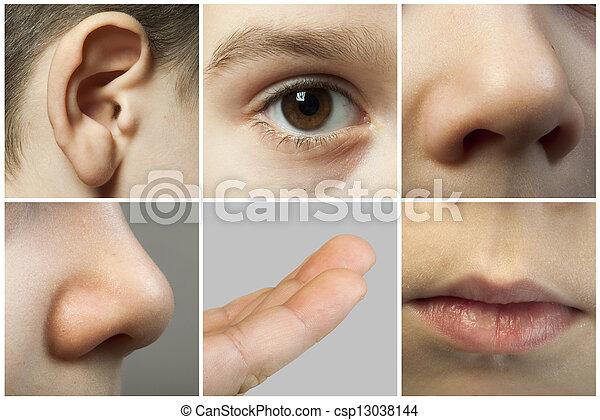 Los sentidos humanos - csp13038144