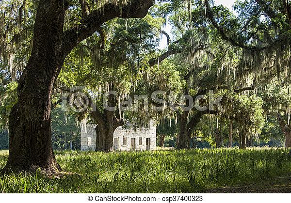 Carolina del Sur - csp37400323