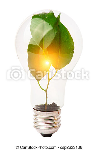 Luces con plantas creciendo dentro - csp2623136