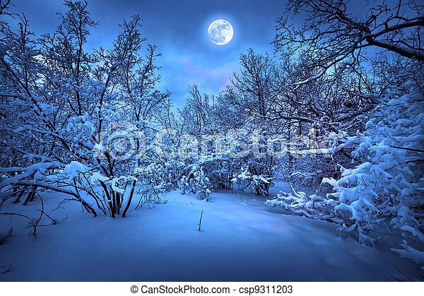 Noche de luna en la madera de invierno - csp9311203