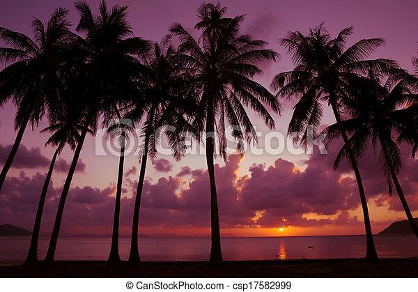 Palmeras en la playa al atardecer - csp17582999