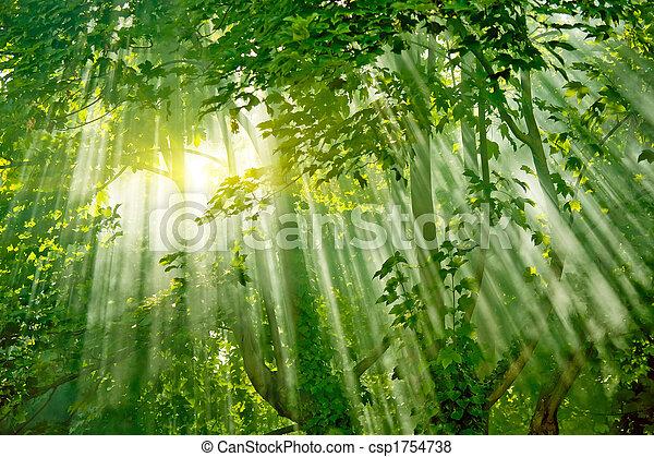 Luz solar mágica en el bosque - csp1754738