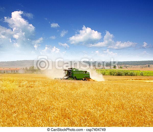Combina cosechadora cosechando cereales - csp7404749