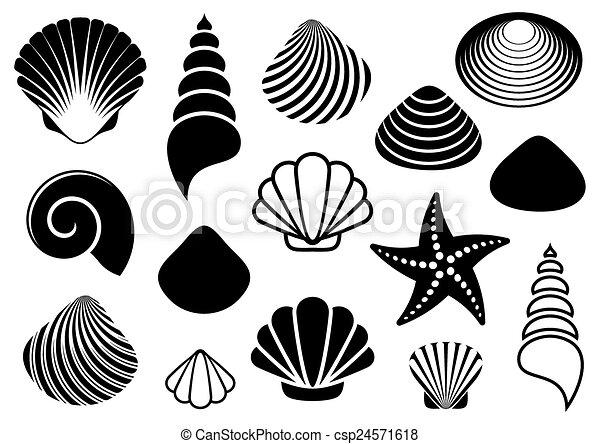 Conchas marinas y estrellas de mar - csp24571618