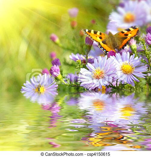 Dos mariposas sobre flores con reflejo - csp4150615