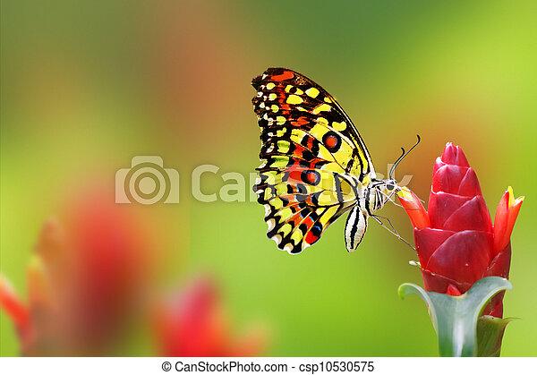 Mariposa Monarca - csp10530575