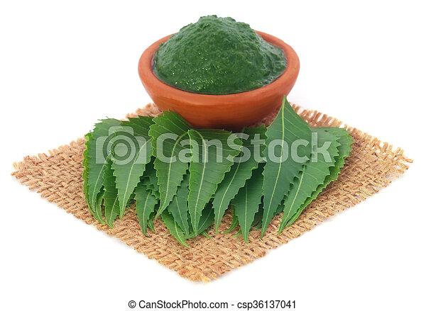 El neem medicinal se va - csp36137041