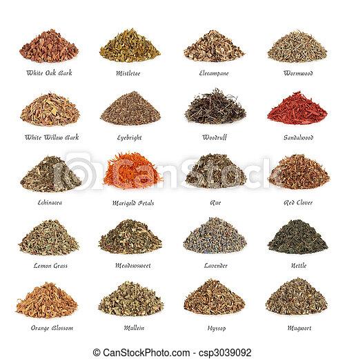 Hierbas medicinales y mágicas - csp3039092
