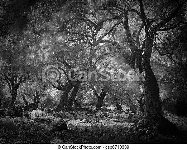 Misterioso bosque oscuro - csp6710339