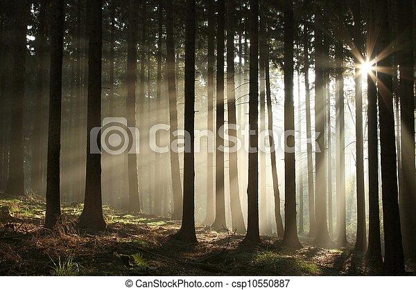 Misty otoñal bosque al amanecer - csp10550887