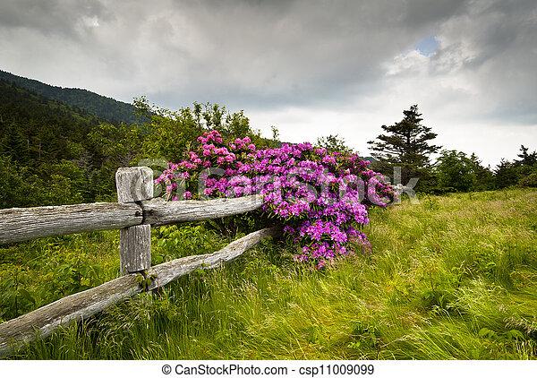 Roan Mountain State Park tallers la flor de rododendron florece naturaleza al aire libre con valla de madera - csp11009099