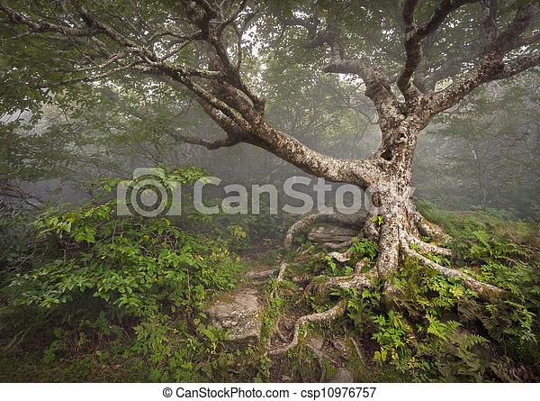 Espeluznante árbol de cuento de hadas espeluznante bosque fantasma de bosques apalaches paisaje de fantasía NC en los jardines de las montañas de las colinas azules cerca de Nashville North Carolina - csp10976757