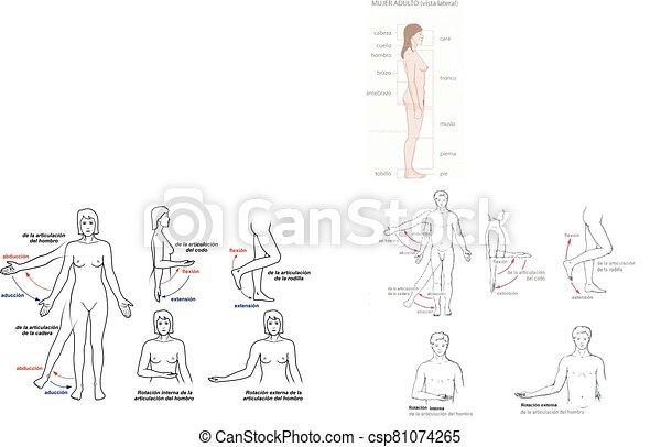 movimientos, articulares - csp81074265