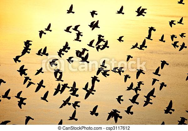 Reloj de aves silueta - csp3117612