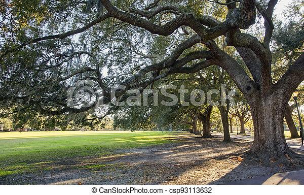musgo, árboles, parque, roble, sabana, español - csp93113632