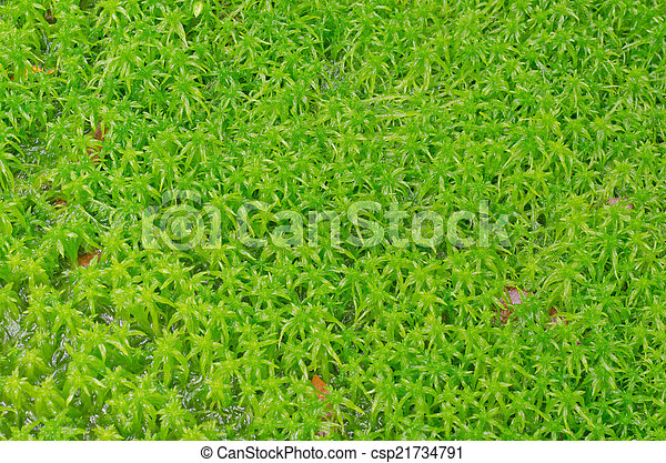 Moss de Sphagnum - csp21734791