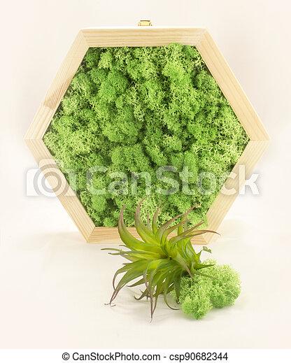 musgo, hexagonal, epiphyte, panel - csp90682344
