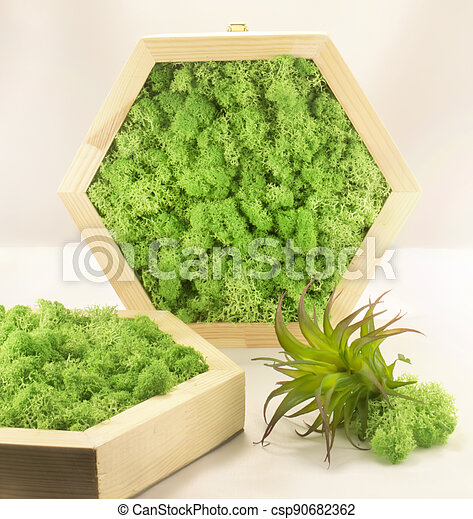 musgo, hexagonal, epiphyte, panel - csp90682362