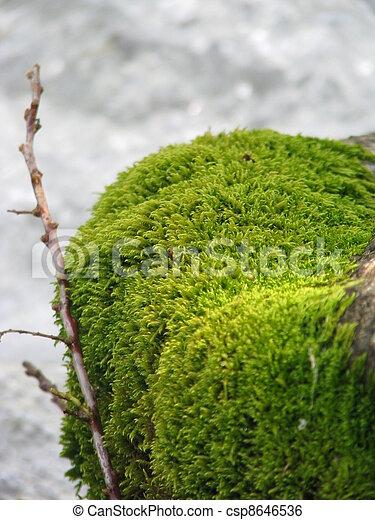 Moss - csp8646536