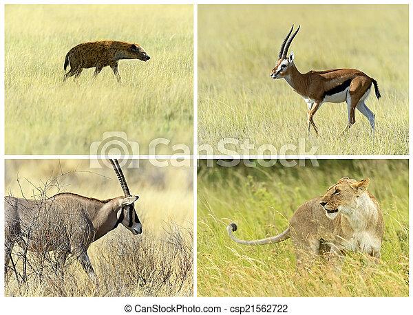 Mamíferos de la sabana africana en su hábitat natural - csp21562722