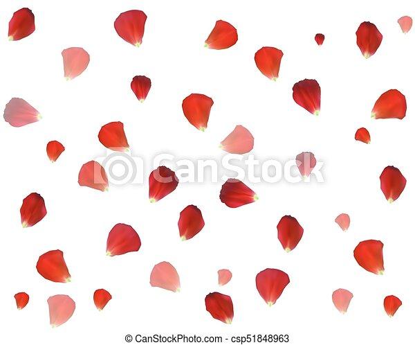 Antecedentes de pétalos de rosa naturalistas. Ilustración de vectores. - csp51848963